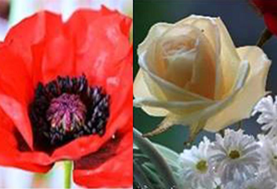 Blumen-aus-Wafer-Paper-mit-Eugenie-Skalosub